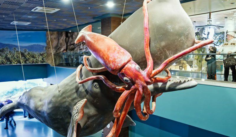 Graban por primera vez a un calamar gigante cazando en el océano