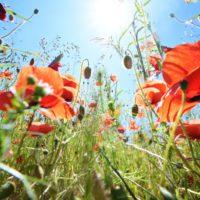 Día de la Biodiversidad: todos somos parte de la solución