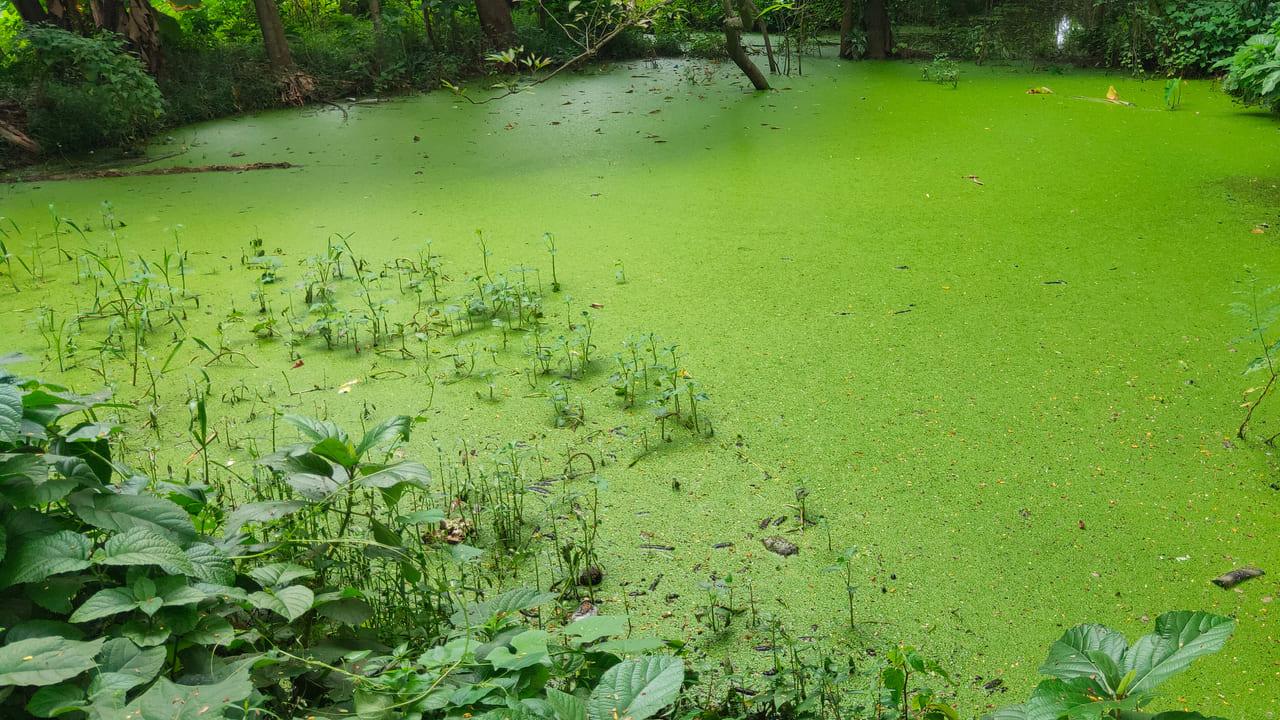 agua lagos eutrofización