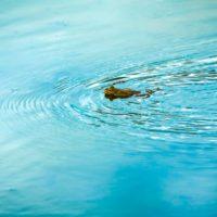 Impresionante vibración del agua con el canto de una rana