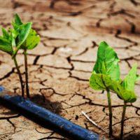 El cambio climático amenaza un tercio de la producción de alimentos