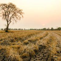 Aemet estrena un sistema para monitorizar la sequía en tiempo real