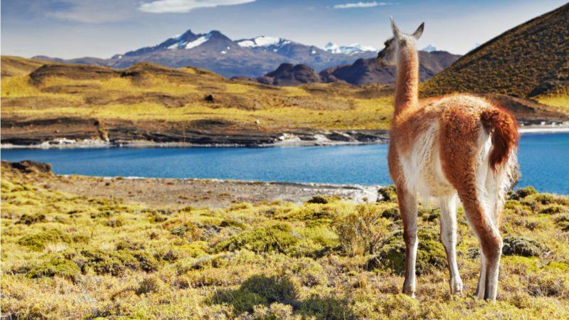 El interminable proceso de Chile para proteger su biodiversidad