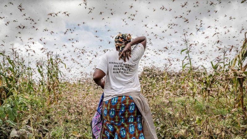 Las plagas ya arrasan el 40% de los cultivos del planeta e irán a más