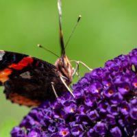 La Eurocámara exige a la UE objetivos vinculantes en biodiversidad