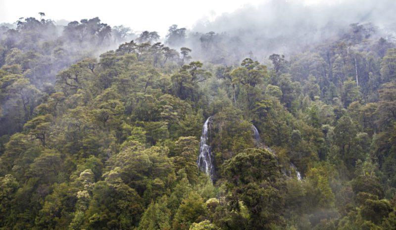Bosques antiguos de Chile, cuidadores del agua y el suelo