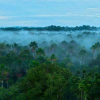 Los bosques tropicales buscan protección en su Día Mundial