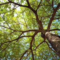 El árbol, un recurso de valor incalculable
