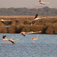Europa condena a España por no proteger el agua y hábitats de Doñana