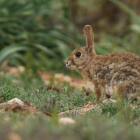 España incumple todas las Metas de Aichi sobre biodiversidad