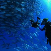 Hope Spots: un rayo de esperanza para el mundo marino