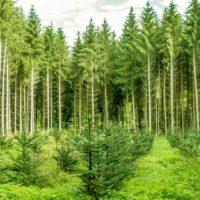 """Un """"tsunami"""" de árboles para Pakistán"""