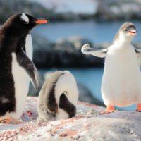 La Antártida, cerca de sobrepasar cinco puntos de inflexión críticos