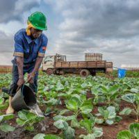 La FAO llama a mejorar la productividad del agua para reducir la desnutrición