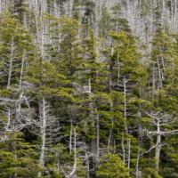3.000 millones de árboles: soluciones climáticas naturales en EEUU