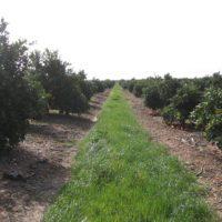 La erosión amenaza los suelos agrarios de España