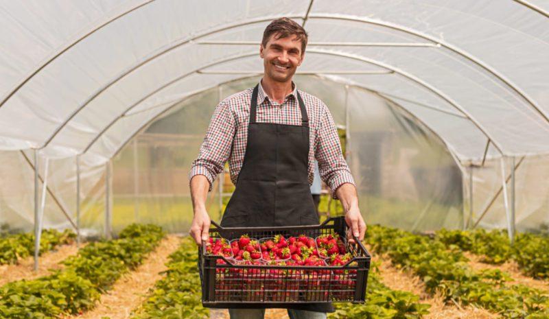Invernaderos solares: hortalizas con una huella hídrica 20 veces menor