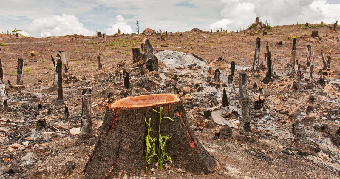 ¿Sabes qué se entiende por Ecocidio y qué se espera de este término?