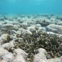El 40% de los peces de arrecife sucumbirán tras la muerte de los corales