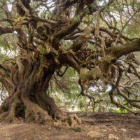 'Elegía de las cosas perdidas': danza para salvar olivos milenarios