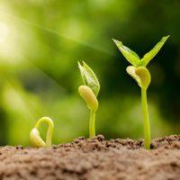 Bibliotecas de semillas para preservar variedades únicas