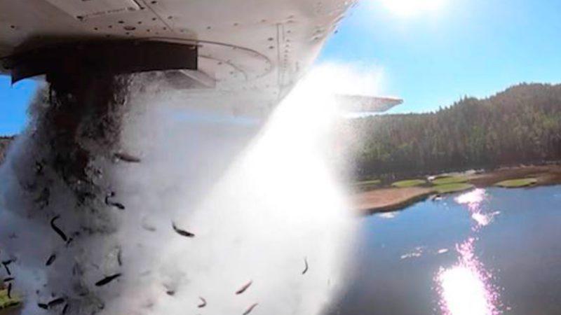 Utah lanza peces desde una avioneta para repoblar un lago