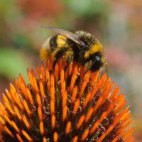 El declive de los insectos polinizadores pone en jaque a dos tercios del planeta