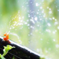El agua regenerada, una importante alternativa para los cultivos