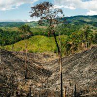 Colombia endurece el delito de deforestación para proteger su selva