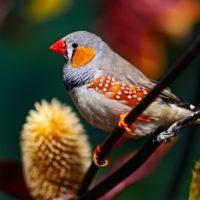 Los humanos iniciaron en el pasado una extinción que arrasó a las aves