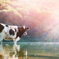 Mejorar la calidad del agua aumenta el rendimiento del ganado