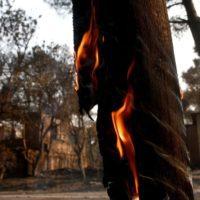 Grecia se achicharra por la ola de calor y los incendios forestales