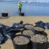 La crisis ecológica del Mar Menor ya supera a la de 2019