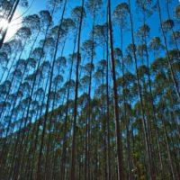 Reforestar puede enfriar el planeta más de lo pensado