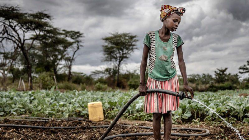 Sistemas alimentarios más sostenibles, saludables y equitativos para un planeta sano