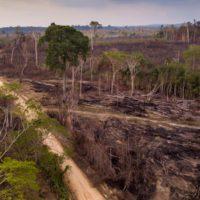 En 2050 se habrá perdido el 40% de la selva amazónica