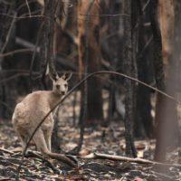 Australia se resiste a participar en la Cumbre del Clima de Glasgow