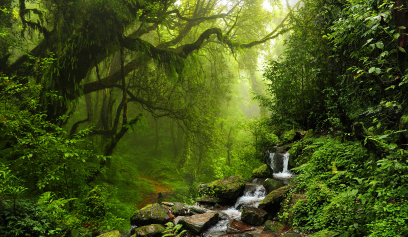 La gestión de los bosques también debe centrarse en el agua