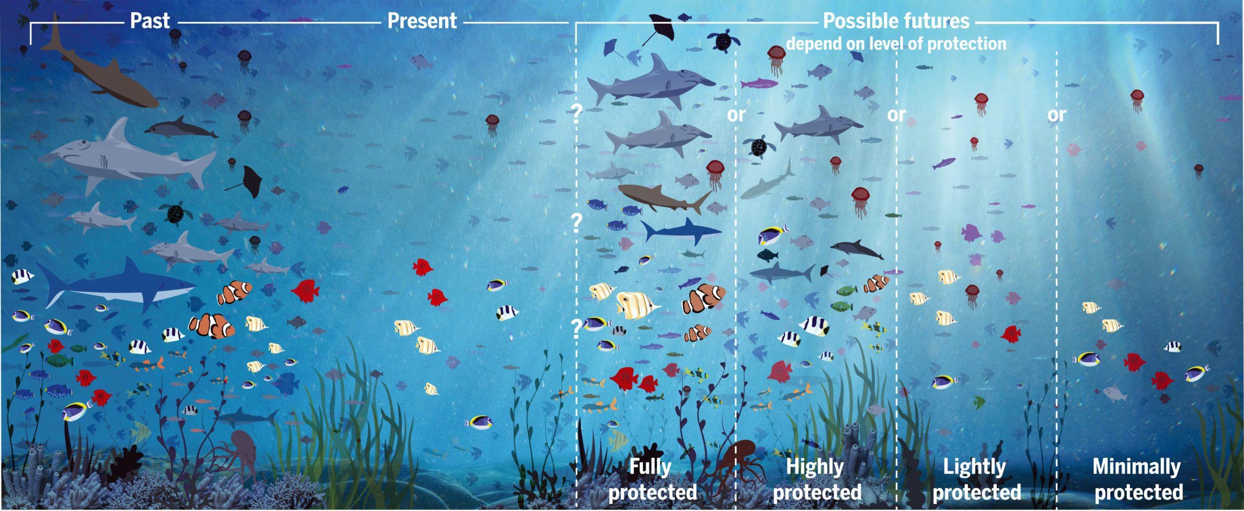 océanos, ciencia, conservación, biodiversidad