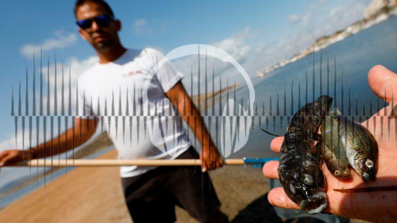 Casos de éxito internacional para salvar el Mar Menor