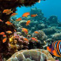 La ciencia publica una guía mundial para proteger los océanos
