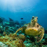 La urgencia por conservar el Mediterráneo llega al Congreso de la Naturaleza