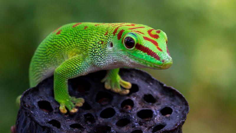 Arranca la COP15 con la misión de salvar la biodiversidad