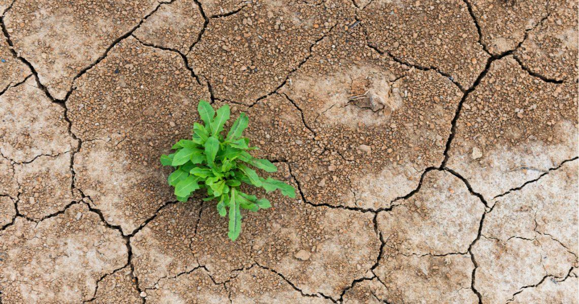 La COP26 va desvelando un programa falto de agua