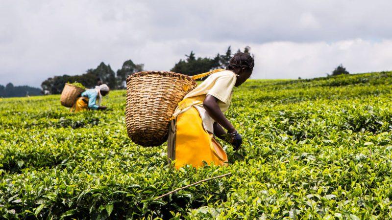 Desarrollan un indicador de inseguridad alimentaria basado en el inicio de las lluvias
