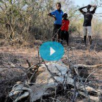 El hambre y la sequía asolan la costa de Kenia