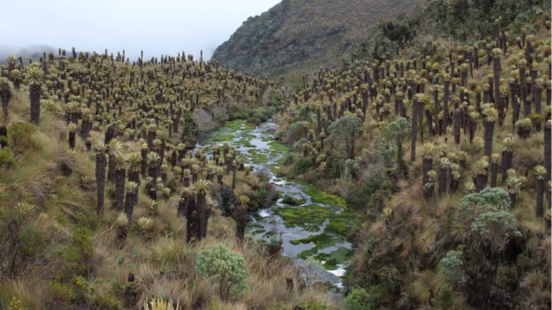 Las fábricas de agua de los Andes, contra las cuerdas